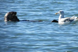 Saving sea otters: Star in a kids' book