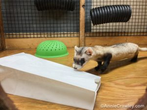 [Image] Jeff give his BFFs paper bags for enrichment. They love the crinkly sound!