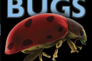 BUGS up close cover copy square