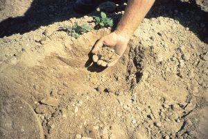 Soil 38362544974_0a5a42159e_b