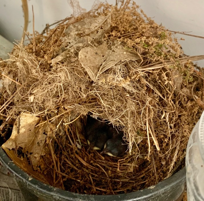 nest -- structure