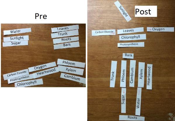 Tree vocabulary pre post small