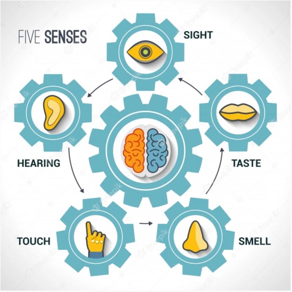 5 senses graphic