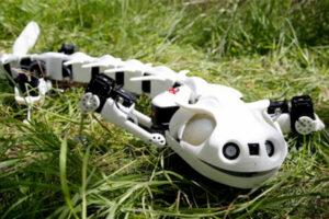 Interview_Biorobotics1